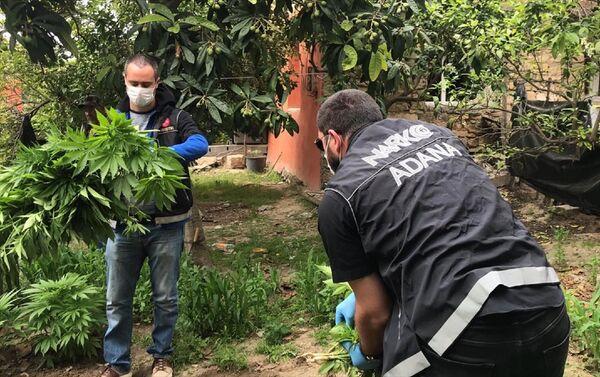 Kaşoba Mahallesi'nde de düzenlenen operasyonda ise bir evin bahçesinde toprağa ve saksılara ekili 126 kök Hint keneviri ele geçirildi, zanlı 56 yaşındaki B.K. gözaltına alındı. - Sputnik Türkiye
