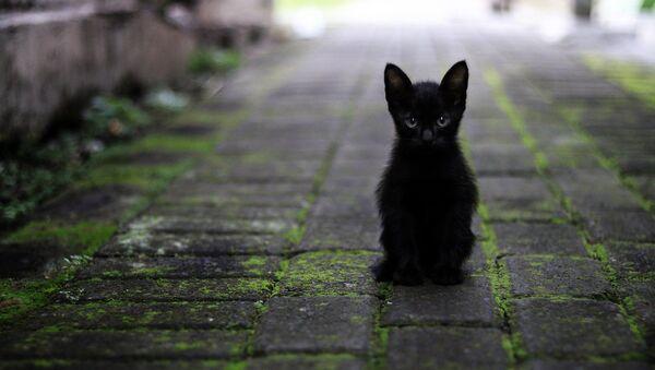 kedi-siyah kedi - Sputnik Türkiye