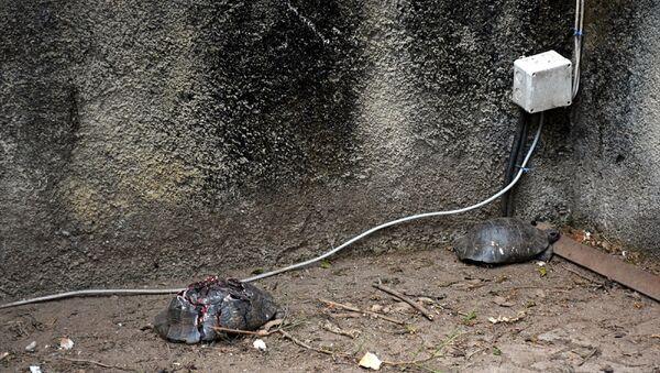 Alanya'da çok sayıda kaplumbağa taşla ezilerek telef edildi - Sputnik Türkiye