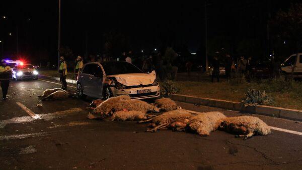 Elazığ'da yarış yapan 2 otomobil koyun sürüsüne daldı, 30'unu öldürdü. - Sputnik Türkiye