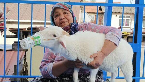 'Torunum' diye sevdiği kuzusunu koronavirüsten korumak için ayran kutusundan maske yaptı - Sputnik Türkiye