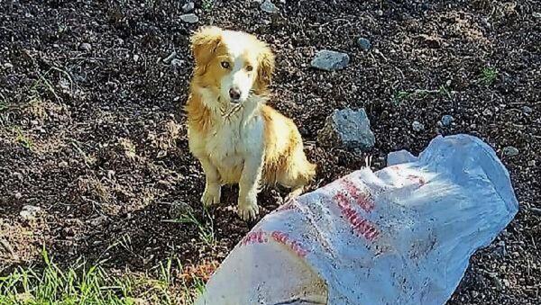 Ağzı bağlı çuvala konan köpek ölüme terk edildi - Sputnik Türkiye