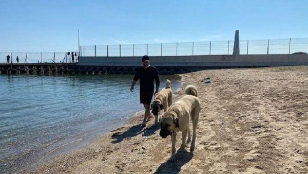 Kadıköy'de çoban köpekleri sahil keyfi yaptı - Sputnik Türkiye