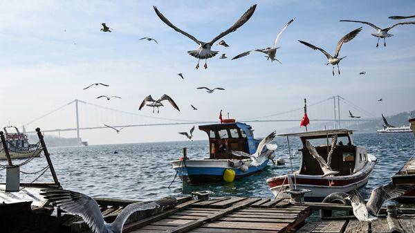 İstanbul - Boğaz - Martı - tekne - köprü - Sputnik Türkiye