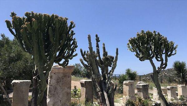 Tiberius Claudius Flavianus Celer'e adanan anıt - Sputnik Türkiye
