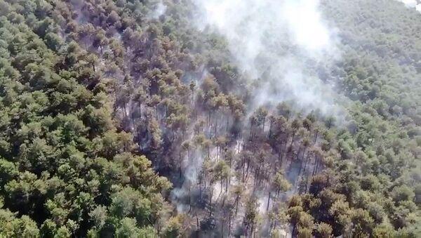 Maltepe Kayışdağı Ormanı'nda çıkan yangın, itfaiye ekiplerinin müdahalesi sonucu kontrol altına alındı. - Sputnik Türkiye