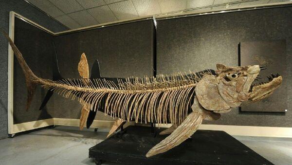Balık fosili - Sputnik Türkiye