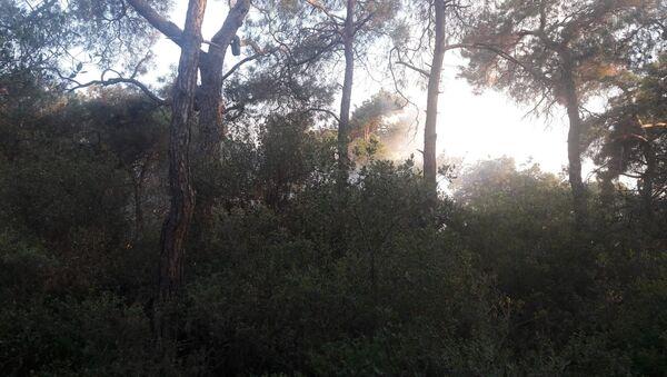 Büyükada, orman yangını - Sputnik Türkiye